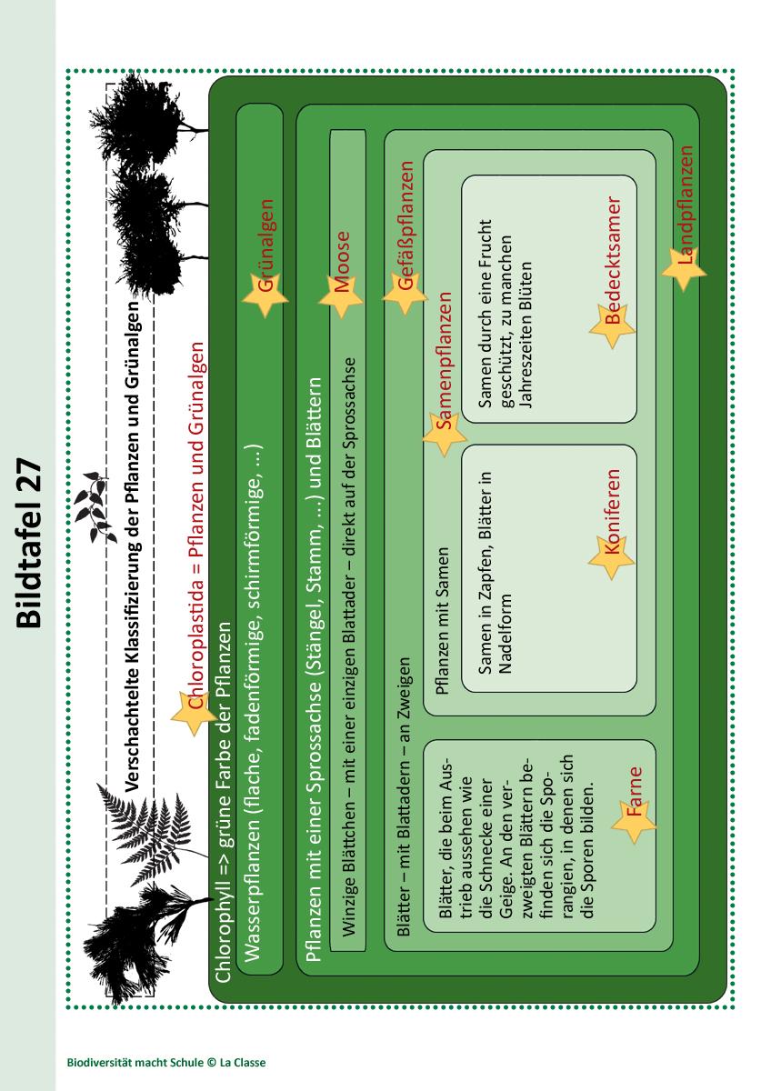Unterrichtsstunde 5: Ordnung in die Biodiversität bringen: Wie ...