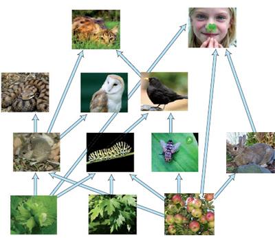 Animals  Tiere  Arbeitsblätter und Unterrichtsmaterial