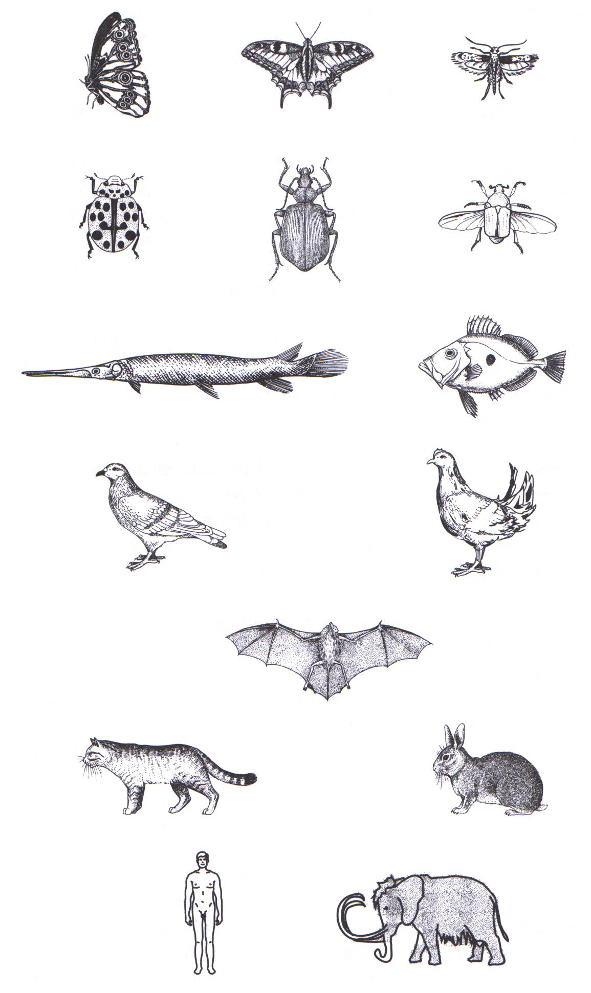 Die Klassifizierung von Lebewesen