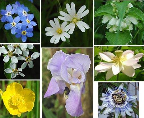 Die lebensstadien der bl tenpflanzen for Tous les plantes