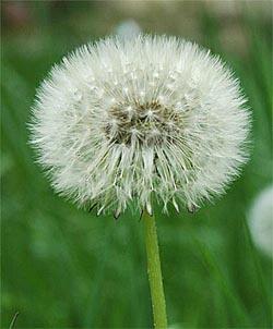 Fach Naturwissenschaften Thema Samenpflanzen